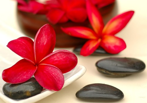 rote Sternblüten neben schwarzen Steinen