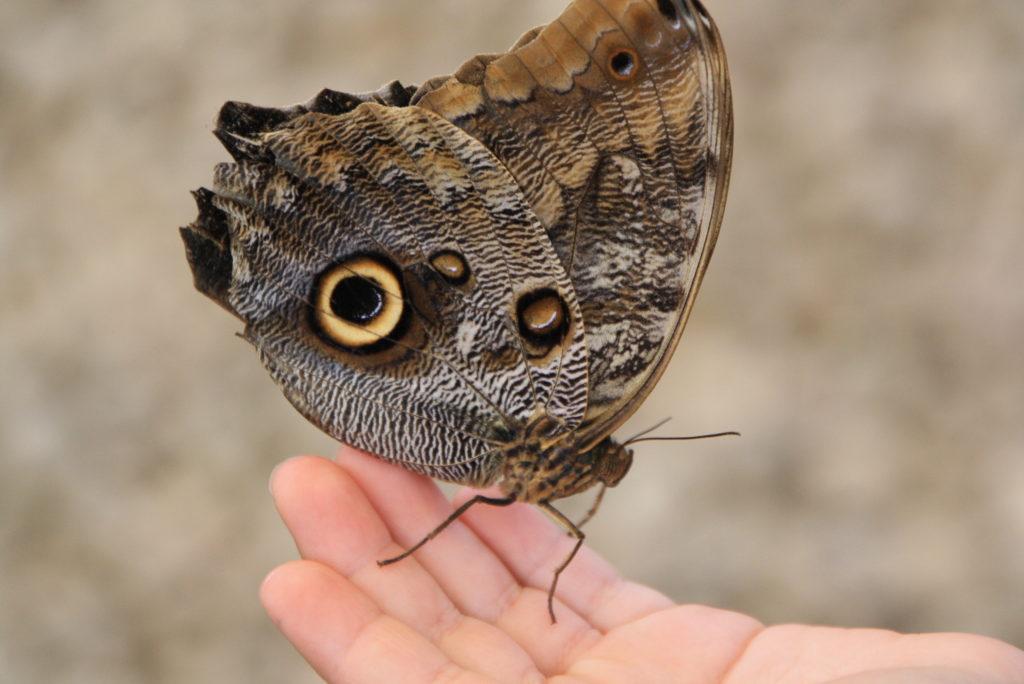 Schmetterlinge auf der Hand